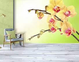 Фотообои текстурированные, виниловые Цветы, 250х380 см, fo01inV_fl12068, фото 3