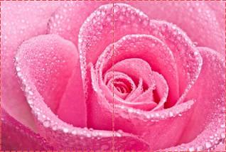 Фотообои бумажные гладь, Цветы, 200х310 см, fo01inB_fl10606, фото 2