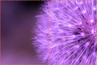 Фотообои бумажные гладь, Цветы, 200х310 см, fo01inB_fl13259, фото 2