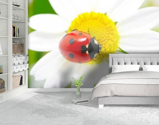 Фотообои бумажные гладь, Цветы, 200х310 см, fo01inB_fl12590, фото 2