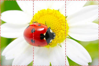 Фотообои текстурированные, виниловые Цветы, 250х380 см, fo01inV_fl12590, фото 2