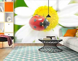 Фотообои текстурированные, виниловые Цветы, 250х380 см, fo01inV_fl12590, фото 3