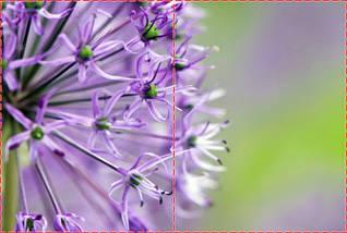 Фотообои бумажные гладь, Цветы, 200х310 см, fo01inB_fl102690, фото 2