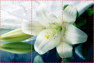 Фотообои текстурированные, виниловые Цветы, 250х380 см, fo01inV_fl102024, фото 2