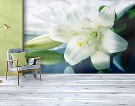 Фотообои текстурированные, виниловые Цветы, 250х380 см, fo01inV_fl102024, фото 3