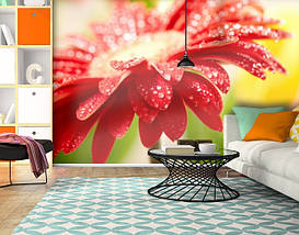 Фотообои бумажные гладь, Цветы, 200х310 см, fo01inB_fl10610, фото 3