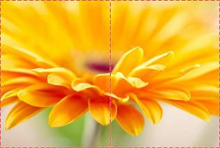 Фотообои бумажные гладь, Цветы, 200х310 см, fo01inB_fl102210, фото 2