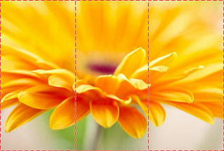 Фотообои текстурированные, виниловые Цветы, 250х380 см, fo01inV_fl102210, фото 2