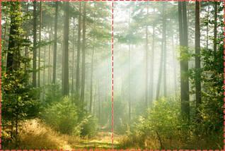 Фотообои бумажные гладь, Лес, 200х310 см, fo01inB_fs00032, фото 2