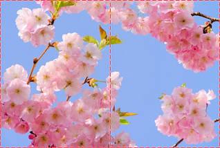 Фотообои бумажные гладь, Цветы, 200х310 см, fo01inB_fl13727, фото 2