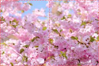 Фотообои бумажные гладь, Цветы, 200х310 см, fo01inB_fl12023, фото 2