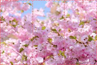 Фотообои текстурированные, виниловые Цветы, 250х380 см, fo01inV_fl12023, фото 2