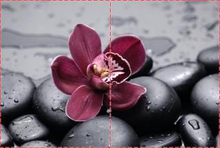 Фотообои бумажные гладь, Цветы, 200х310 см, fo01inB_fl11548, фото 2