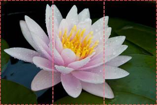 Фотообои текстурированные, виниловые Цветы, 250х380 см, fo01inV_fl10853, фото 2
