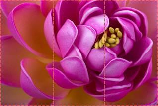Фотообои текстурированные, виниловые Цветы, 250х380 см, fo01inV_fl13245, фото 2