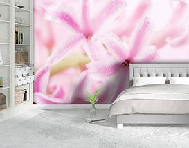 Фотообои бумажные гладь, Цветы, 200х310 см, fo01inB_fl10776, фото 2
