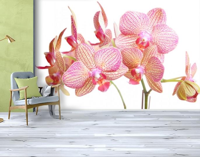 Фотообои бумажные гладь, Цветы, 200х310 см, fo01inB_fl13251