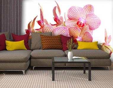 Фотообои текстурированные, виниловые Цветы, 250х380 см, fo01inV_fl13251