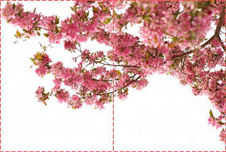 Фотообои бумажные гладь, Цветы, 200х310 см, fo01inB_fl13400, фото 2