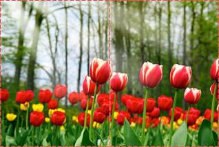 Фотообои бумажные гладь, Цветы, 200х310 см, fo01inB_fl12624, фото 2