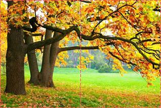 Фотообои бумажные гладь, Лес, 200х310 см, fo01inB_fs00027, фото 2