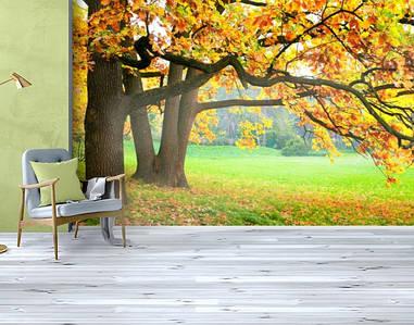 Фотообои текстурированные, виниловые Лес, 250х380 см, fo01inV_fs00027