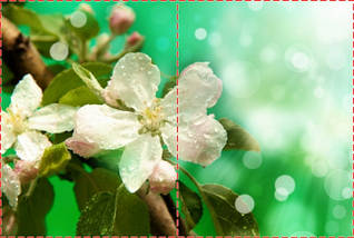 Фотообои бумажные гладь, Цветы, 200х310 см, fo01inB_fl101440, фото 2