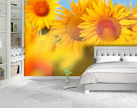 Фотообои текстурированные, виниловые Цветы, 250х380 см, fo01inV_fl10687, фото 2