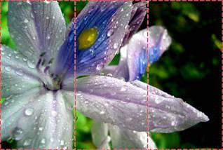Фотообои текстурированные, виниловые Цветы, 250х380 см, fo01inV_fl101106, фото 2