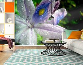 Фотообои текстурированные, виниловые Цветы, 250х380 см, fo01inV_fl101106, фото 3