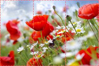 Фотообои текстурированные, виниловые Цветы, 250х380 см, fo01inV_fl12018, фото 2