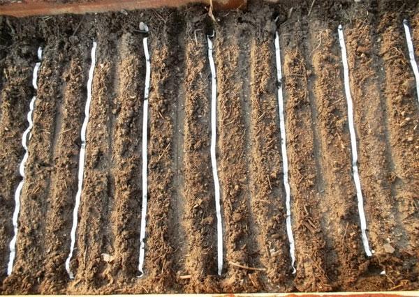 подготовка почвы под посев морковки