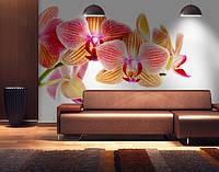 Фотообои текстурированные, виниловые Цветы, 250х380 см, fo01inV_fl12682