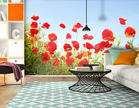 Фотообои бумажные гладь, Цветы, 200х310 см, fo01inB_fl102603, фото 3