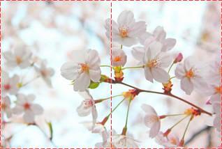 Фотообои бумажные гладь, Цветы, 200х310 см, fo01inB_fl13117, фото 2