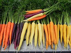 Пять лучших сортов моркови