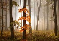 Фотообои 3D природа 368х254 см Осенний лес (5153WG)