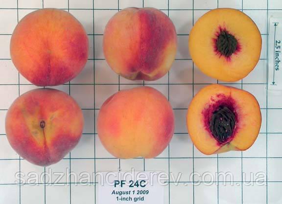 Саджанці персика Флеминг Фьюри PF-24-C (Cold Hardy)