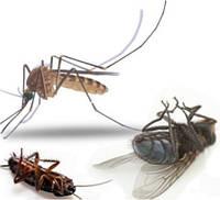 Услуги уничтожения насекомых