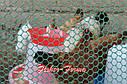 20х20х2мм - пластиковая сетка  (1х30 метров) - для ограждений, фото 8