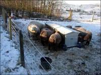Купить электро-изгородь в Украине (комплект эконом)
