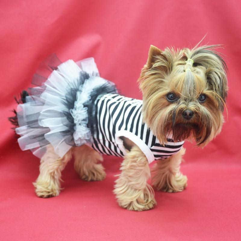 Платье для собак Карнавал №0 25 х 40 см