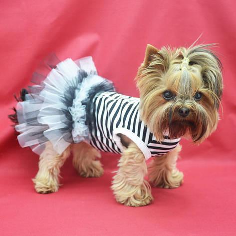 Платье для собак Карнавал №0 25 х 40 см, фото 2