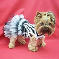 Платье для собак Карнавал йорк1 28 x 40 см