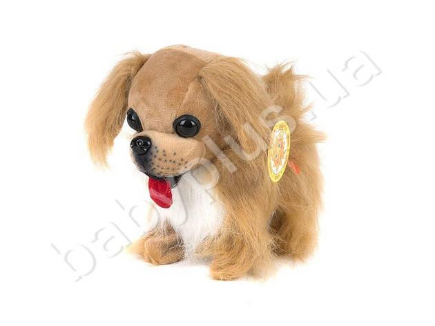 SALE! Мягкая игрушка. Собака Пекинес на батарейках (ходит, лает), фото 2