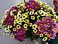 Букет микс из хризантем №1, фото 4