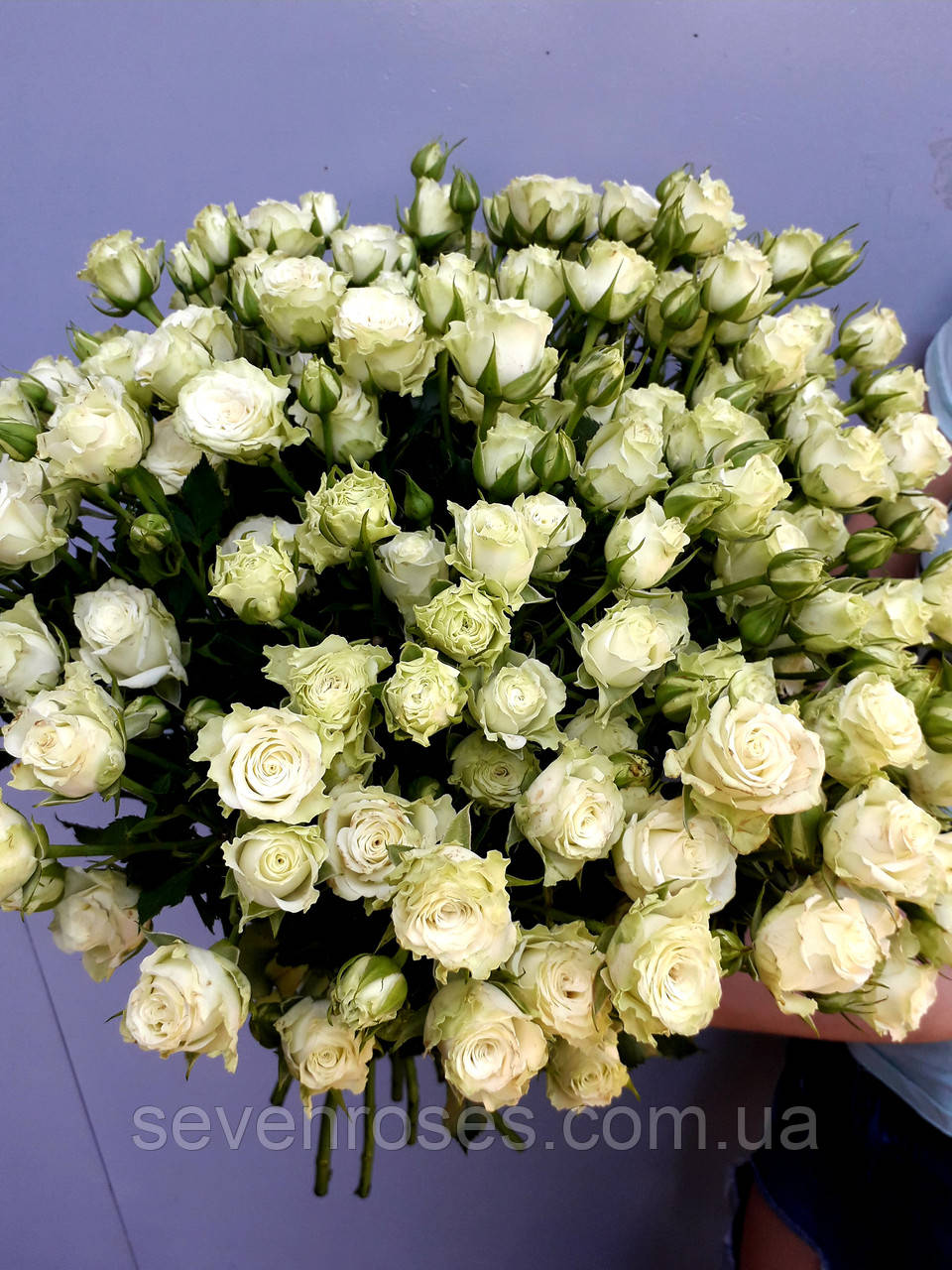 """Букет из розы спрей """"Green Glow"""" 60cм 21шт"""