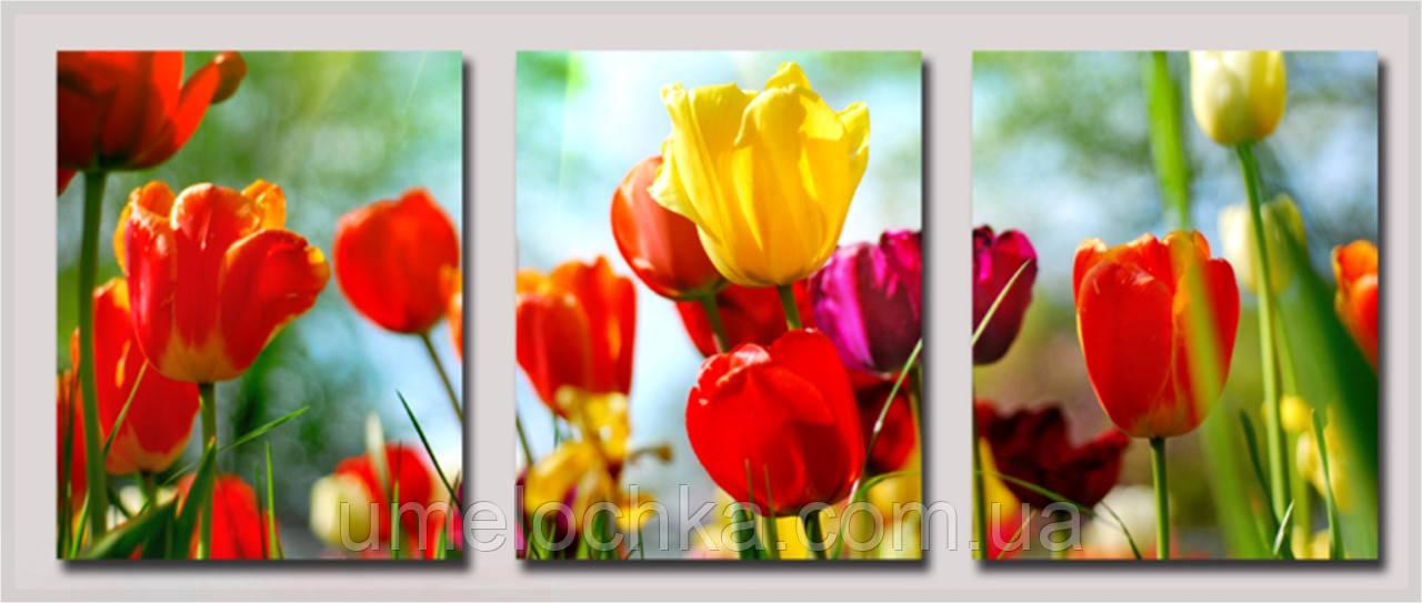 Картина раскраска триптих цветы. Садовые тюльпаныТриптих 50 х 150 см(DZ093)