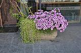 Вазон для цветов Атлант, фото 5