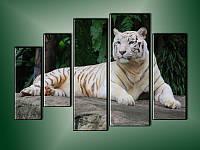 """Модульная картина """"Бенгальский тигр"""" Модель: 7950007"""